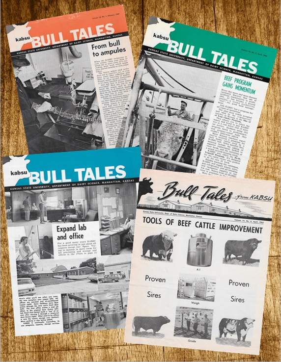 Bull Tales Collage