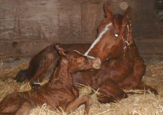 Equine>Katie and 07 foal.jpg