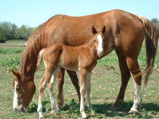 2007 Foals>patsy and foal.jpg