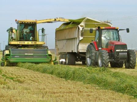 Cutting Silage
