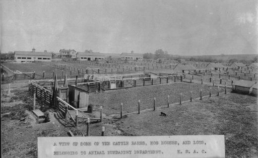Early livestock lots