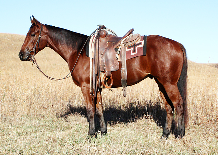 For Sale Equine Species Animal Sciences And Industry