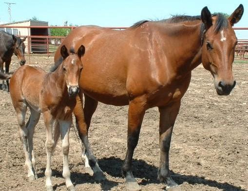 Horse (3)>uno with filly