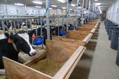 Dairy Nutrition Research